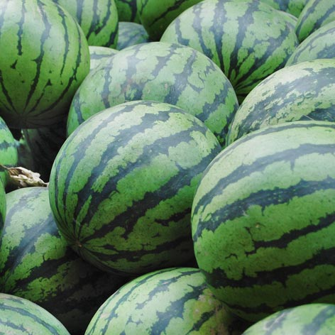 whg_watermelon_472x472